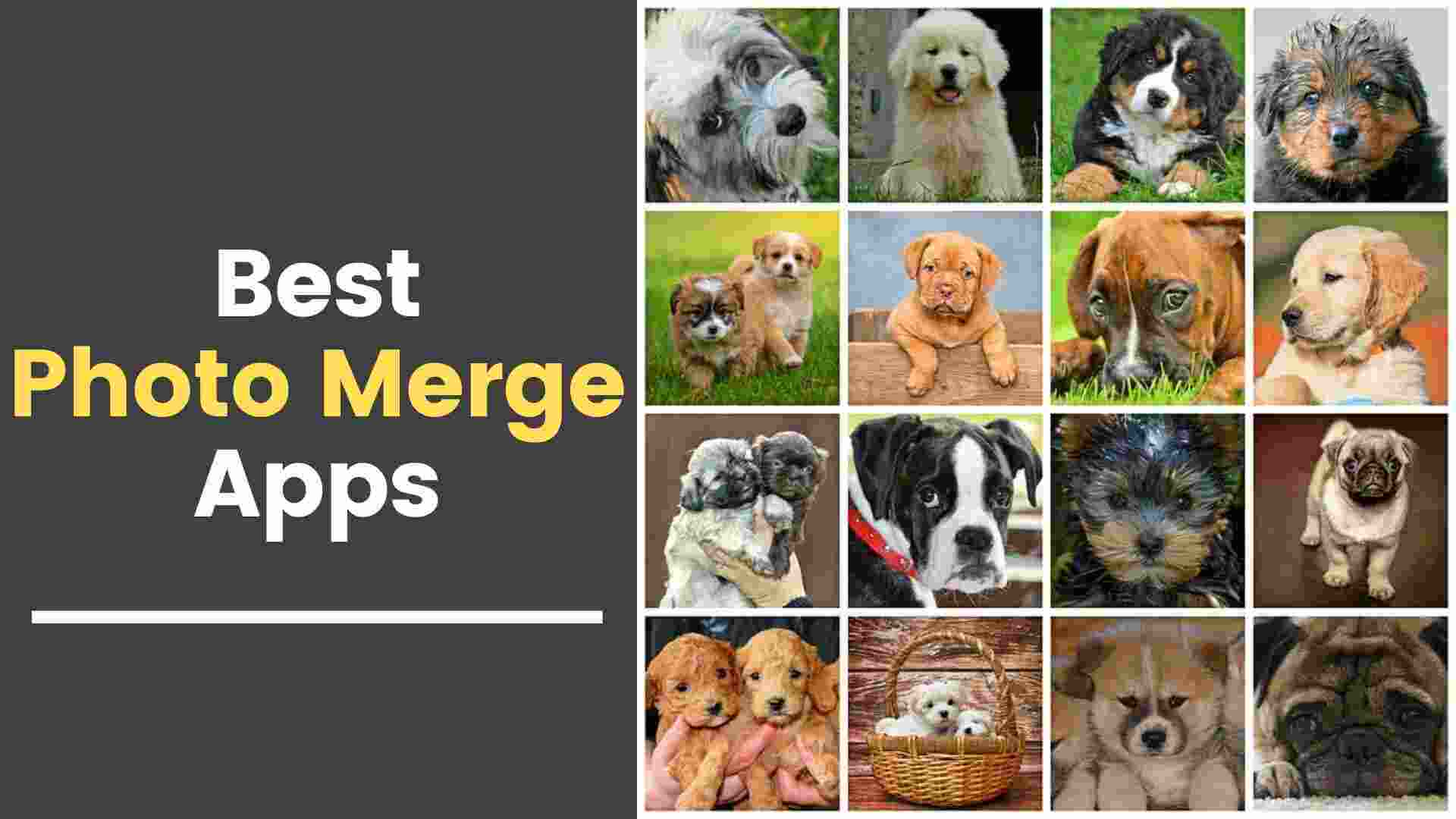 Photo Merge Apps For Combining Photos