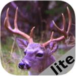 Deer Calls Sounds Lite